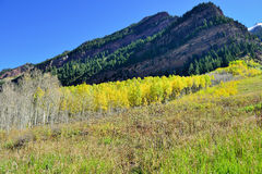 Mountains with colorful yellow, green and red aspen during foliage season Stock Photo