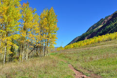 Mountains with colorful yellow, green and red aspen during foliage season Royalty Free Stock Image