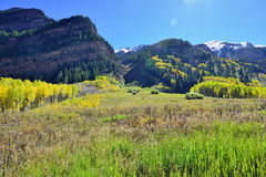 Mountains with colorful yellow, green and red aspen during foliage season Stock Photos