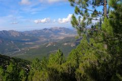 The mountains covered with coniferous trees, Corsica Royalty Free Stock Photo