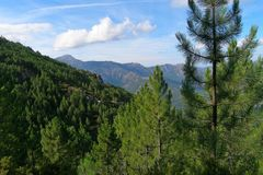 The mountains covered with coniferous trees, Corsica Stock Images