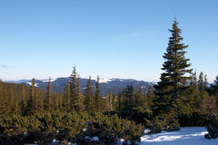 Mountains covered with fir forest Stock Photography