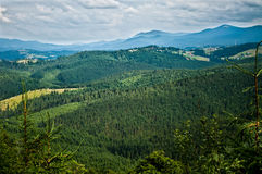 Mountains covered with forest Stock Image
