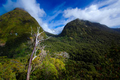 Mountains covered by forests Royalty Free Stock Photo