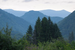 Mountains covered by forests and a group of pine trees Stock Images