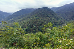 Mountains covered in forests Stock Image