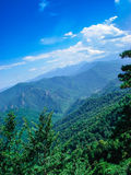 Mountains covered with forests Royalty Free Stock Photos