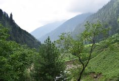 Mountains covered by green pine forests. Green mountain forest and nature landscape royalty free stock images