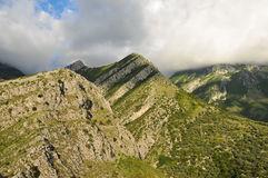 Mountains covered with plants. Montenegro. Mountains covered with plants due to low clouds stock image