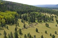 Mountains, Cowboys, Horses Royalty Free Stock Image