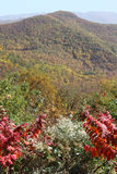 Mountains Decked in Fall Colors Royalty Free Stock Images