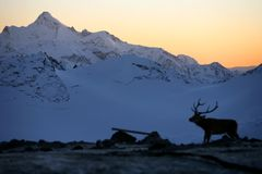 Mountains and deer, Elbrus area Stock Photo