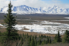 Mountains Denali National Park. Snow covered mountains in Denali National Park in May royalty free stock images