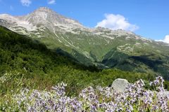 Mountains of Dombay, Russia. Beautiful mountains of Dombay in Caucasus, Russia in summer Royalty Free Stock Images