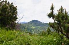 In the mountains Stock Photos