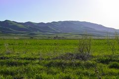 Mountains and even green field. Mountains of Kazakhstan. stock images