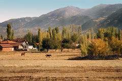 Mountains, the farm and the horses in the field autumn Stock Photos