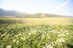 Mountains field. Mountains green field with flowers Stock Photo