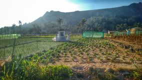 Mountains and fields of Garlic at Ly Son, Vietnam royalty free stock photography