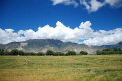 The mountains and fields. Tibet, located in the edge of a mountain in a large Royalty Free Stock Images