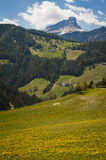 Mountains and fields of yellow dandelions Royalty Free Stock Photography