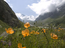 Mountains and flowers. Caucasus. Kabardino-Balkariya. Bezengi Stock Photos
