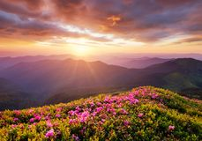 Mountains during flowers blossom and sunrise. Flowers on the mountain hills. Beautiful natural landscape at the summer time