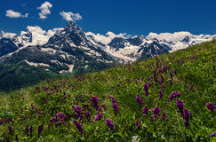 Mountains and flowers Caucasus. Morning in the mountains Dombay. Caucasus Royalty Free Stock Photos