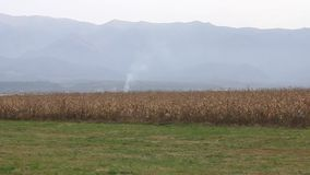 Mountains in fog and cornfield stock video footage