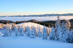 Mountains in a foggy morning and snow-covered green Christmas trees.Marvelous winter background. Beautiful Christmas holliday. stock photo