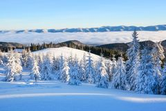 Mountains in a foggy morning and snow covered green Christmas trees. Marvelous winter background. Beautiful Christmas holliday. stock image