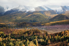 Mountains with forest Stock Images