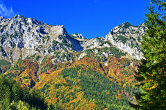 Mountains. And forest in autumn royalty free stock photos