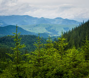 Mountains and forest. Carpathian mountains and wild forest. Landscape Royalty Free Stock Photography
