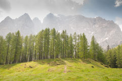 Mountains with forest. Dreamscape, mountains with trees and grass Royalty Free Stock Photos