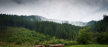 Mountains forest and fog Royalty Free Stock Photo