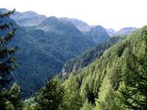 Mountains and forest. Green forest in adamello mountains Stock Photos