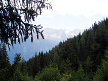Mountains and forest. Mountains with green forest in front Royalty Free Stock Image