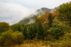 Mountains and Forest in Jiuzhaigou Valley. With fog and cloud around Stock Photo