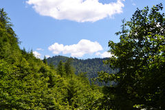 Mountains and forest. Kind on mountains through the forest, many green leaves and blue sky Royalty Free Stock Image