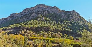 Mountain Penascabia near Bejis. Castellon. Mountains and forest near the source of the river Palancia Royalty Free Stock Image