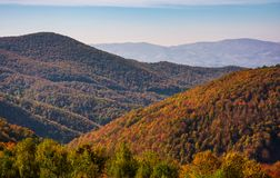 Mountains with forest in red foliage. Lovely nature scenery in Carpathian Mountains Stock Photos