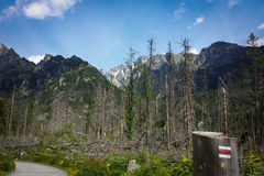 Mountains. Forest and mountains with track marking Royalty Free Stock Photo