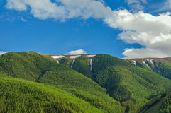 Mountains forest snow peaks sky Stock Image
