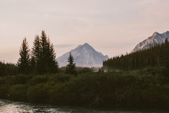 Mountains, forest and trees in Canada Royalty Free Stock Images