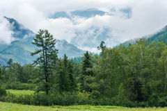 Mountains and forest. Trekking in the Altai Mountains Royalty Free Stock Photography
