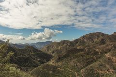 Mountains forestation landscape in Gran Canaria. Forest Stock Images