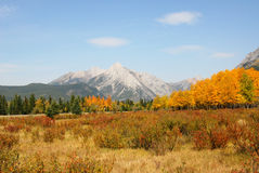 Mountains and forests. Colorful autumn view of rocky mountains and forests in kananaskis country, alberta, canada Stock Images