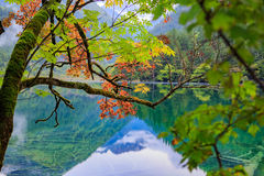 Mountains and forests. Early autumn valley, a warmed by reaching leaves has been changed to red, turquoise lake reflected the distant snow-capped mountains and Stock Images