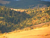 Mountains and forests. Close-up at sunset in Gheorgheni, Romania Royalty Free Stock Photo